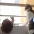 【ネコ】 幼児がベランダで遊んでいた。それ以上はあぶないよ! → 見守る猫はこうします…