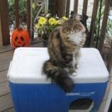 『作ってみよう、野生ネコのための冬のシェルター!♡』の画像