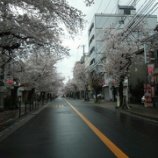 『桜通り〜』の画像
