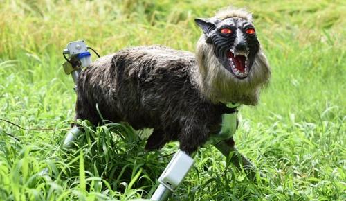 日本がイノシシ対策用に導入したオオカミロボット「スーパーモンスターウルフ」に海外が興味津々