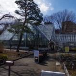 『3月初旬の都立薬用植物園;小平市』の画像