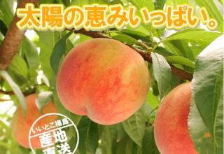【悲報】BBA「桃を試食、旨っ!どこ産かしら?ふ、福島ァ!?ヴエッ!(ゲロゲロゲロゲロ」