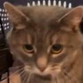 ネコを保護施設から引き取った。ここがキミの新しいお家だよ → 初めての家に猫はこんな感じ…
