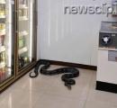 セブンイレブン店内に全長3メートルの大蛇が入り込む タイ