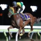 『【大井・東京記念結果】10歳馬サウンドトゥルーが7馬身差で圧勝!』の画像
