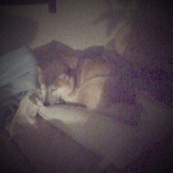 『枕の使い方』の画像
