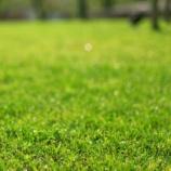 『知らなきゃ損!!管理が簡単な芝生TM-9をご存知?』の画像