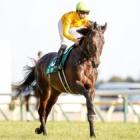 『【東京新聞杯結果】カラテが接戦を制し3連勝 人馬ともに重賞初V』の画像