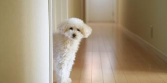 祖母が早く氏ねばそれだけ犬が平和に暮らせるのにと、どうしても良からぬことを考えてしまいます…