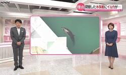 【動画あり】閉鎖された千葉の水族館 イルカ・クマ・ペンギンなどが取り残されてしまう