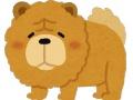 【悲報】食用犬、トムブラウンみちおに捕獲される