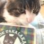 かわいい猫クッキーをいただきました~♪
