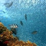 『MSC海のエコラベル:乱獲からの復活』の画像