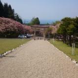 『石崎地主海神社の八重桜』の画像