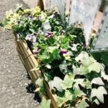 『Fiatoの路面のお花たち』の画像