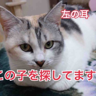 NPO法人 福井犬・猫を救う会