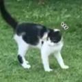 ネコの横をイヌが走って通り過ぎた。こっちだよ♪ 舐めやがって! → 猫と犬はこうなった…
