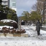 『まとまった雪』の画像