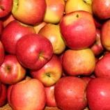 『待ちに待った木村さんのりんご』の画像