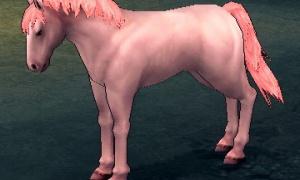 ピンク色の野生馬