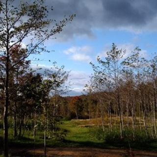 森の温泉~駒の湯温泉通信