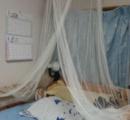 自室のベッドをお姫様仕様にしてみた