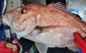 魚がよく釣れる「ネクタイ」