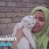 『奇跡の再会:避難民とはぐれてしまった猫』の画像
