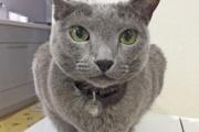 【動物】2年後に猫の寿命が倍に? 死因トップの腎不全から猫を救う特効薬の最前線