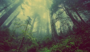 山にまつわる怖い話『龍神岩』『死体と二人』『味覚を失った理由』他