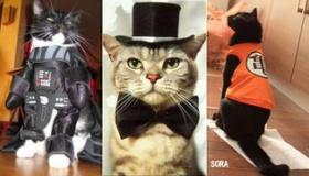 【世界の猫】 ぐぅ カワイイ!! 日本も含めた 世界中の猫がコスプレした写真。   海外の反応