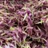 ボーソー米油で彩り鮮やか~食用紫菊のオイル漬け