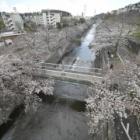 『LAOWA7.5mmF2で巡る恩田川の桜(町田市) 2019/04/02』の画像