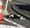 完全におっさんの寝相だ... フリーダムすぎる体勢で日向ぼっこを楽しむネコが発見される