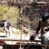 『チン太の行状・2』の画像