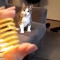 猫「バネが大好きなのーっ!」(動画)