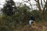 ナラ枯れ病のコナラ。伐採されたみたい~交野の森暮らし~