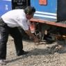 小さな機関車の小さなカマガエ Darjeeling