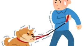 【芸能】愛犬家の工藤静香、炎天下で犬の散歩させる人を見て心を痛める「自分だけ日傘をさして…胸が痛くなる」