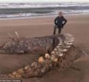 やっぱりネッシーは存在する?スコットランド沿岸に謎の生物の死骸が打ち上げられる