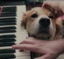 緑の口髭のおっさん、スタインウェイのピアノを魔改造してギターに。ワンコが可愛い。