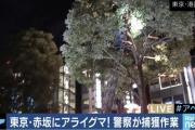 【東京】赤坂にアライグマが出没・・・警察や消防が出動し捕獲