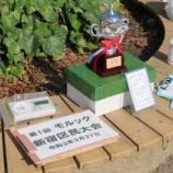 『第1回モルック新宿区民大会 結果』の画像