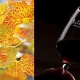 『【イベント】安心院葡萄酒工房「2019年 新酒祭」開催』の画像