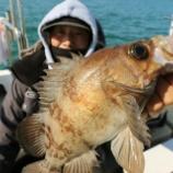 『2月24日 釣果 スーパーライトジギング SLJ 尺メバル狙い!! マゾイやアイナメ混じりの100匹超の大爆釣!(^^)!』の画像