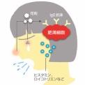"""花粉症を根本から治す新薬""""シダトレン""""の可能性は?――花粉症新治療法"""