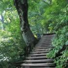 『急登の伯耆大山☆』の画像