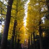 『紅葉🍁真っ盛りの東京』の画像