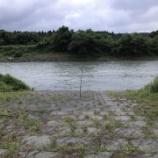 『小鮎と遊ぶ44 (2020/6/20 増水が続く安曇川)』の画像