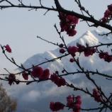 『花の甲斐駒』の画像